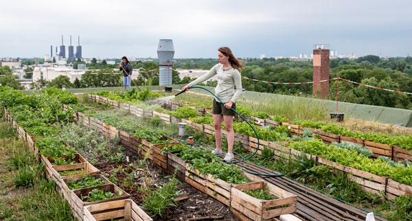 Agricoltura, Coldiretti: in Puglia aumentano gli orti urbani